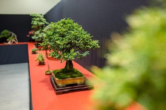 Národní expozice bonsají a suiseki na výstavě Floria Podzim